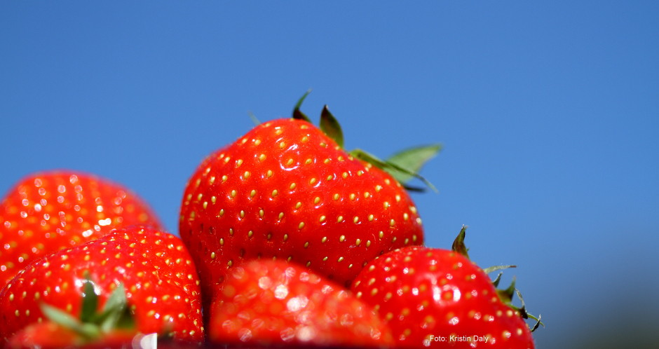 Jordbær, 17. mai, fototips, Kristin Daly