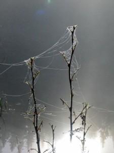 kristin daly, smilerynker, sove ute, tåke, spindelvev