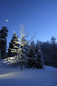 Losbygods, tre opplyst av lys, med nymåne bak