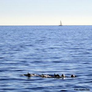 Delfiner, Cinque Terre, Italia, ferie