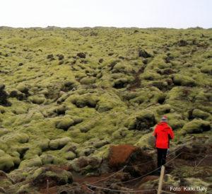 Island, Eldhraun lavafelt, grønn mose