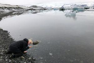 Island Jökulsárlón brakkvann Kristin Daly