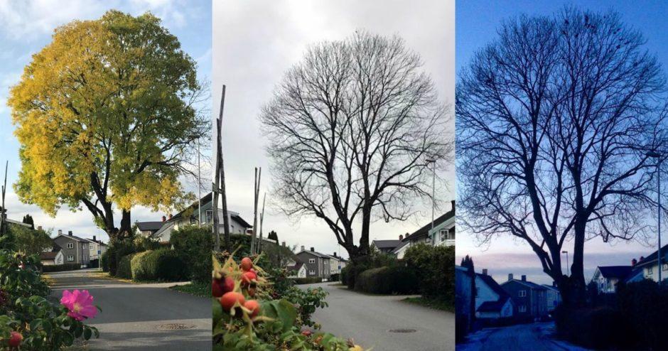 Fototips. tre, Lillestrøm, Smilerynker, Kristin Daly